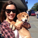 Dog Walker in Charleston