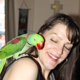 Loving overnight care required for my beautiful Alexandrine Parakeet.