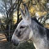 Need Overnight Pet Sitter for Small Ranch