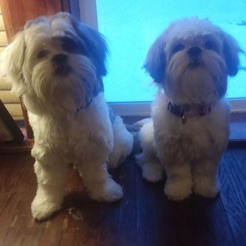 Colorado City, Arizona Dog Sitter - Dog Walker, Pet Sitter in ...