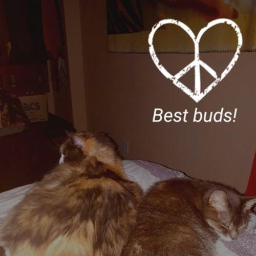 Pet Care Provider Tina V's Profile Picture