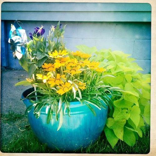 Gardener Provider Danielle E's Profile Picture