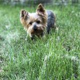 Dog Walker, Pet Sitter in Streamwood