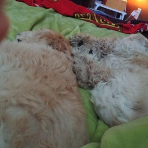 Pet Care Provider Lindsay C's Profile Picture