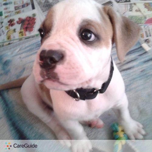 Pet Care Provider Shannon Mchugh's Profile Picture