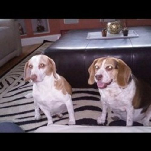 Pet Care Job Malenie V's Profile Picture