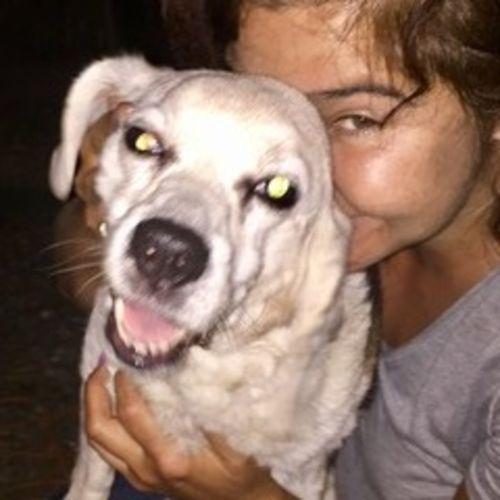 Pet Care Provider Tracy L's Profile Picture