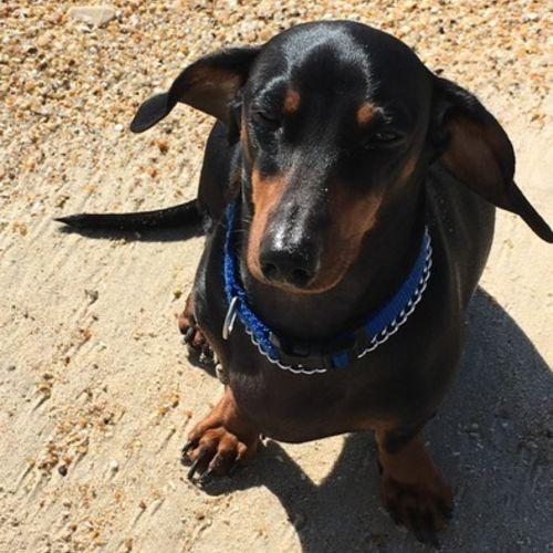 Pet Care Provider Jill Pensiero's Profile Picture