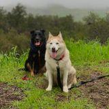 For Hire: Dog Walker/Animal Sitter/Caregiver