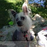 Nanny, Pet Care in Laval