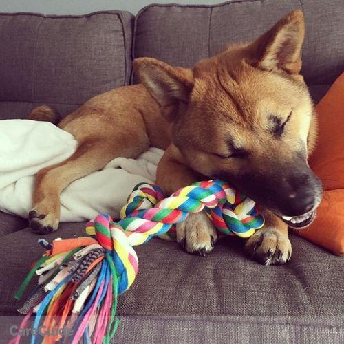 Pet Care Job Alex Bratseiko's Profile Picture