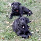 Dog Walker Job, Pet Sitter Job in Onoway