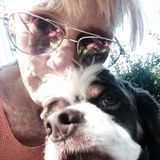 Lake Stevens, Washington Dog Sitter