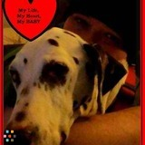 Dog Walker, Pet Sitter in Dayton