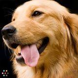 Dog Walker, Pet Sitter in Stillwater