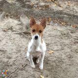 Dog Walker, Pet Sitter in Houston
