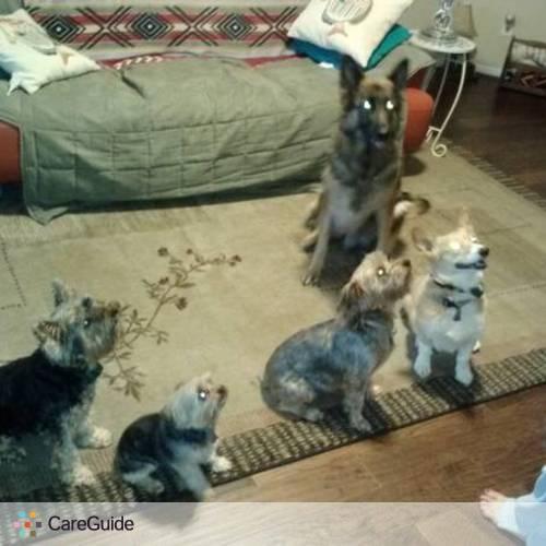 Pet Care Provider Mark Davies's Profile Picture
