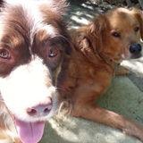 For Hire: Honest Dog Walker in Novato