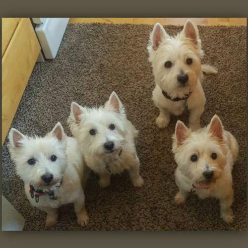 Pet Care Provider Linda S Gallery Image 1