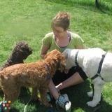 Dog Walker, Pet Sitter in Boston