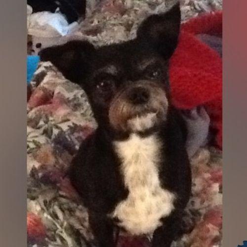 Pet Care Job Teresa Jones's Profile Picture