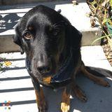 Dog Walker, Pet Sitter in Boone