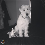 Dog Walker Job in Livonia