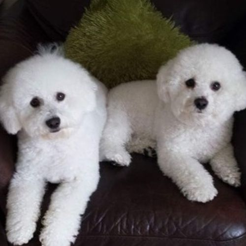 Pet Care Provider Claudia S's Profile Picture