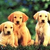 Dog Walker, Pet Sitter in Federal Way