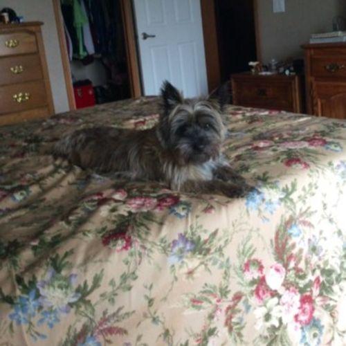 Pet Care Provider Debora Rawding Gallery Image 2