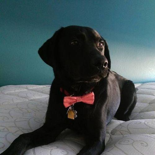 Pet Care Provider Serena C's Profile Picture
