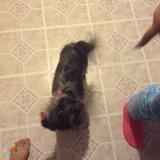 Dog Walker, Pet Sitter in Jonesboro