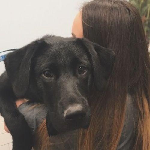 Pet Care Provider Marissa H's Profile Picture