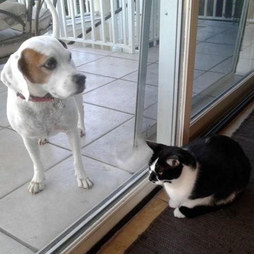 Pet Care Provider Sheila Rice's Profile Picture