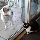 Dog Walker, Pet Sitter in Gulfport