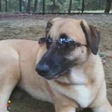 Dog Walker, Pet Sitter in Northumberland