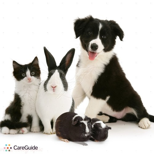 Pet Care Provider Serene Pet Sitting & Home Watch 's Profile Picture