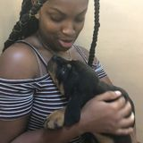 For Hire:Careful Pet Sitter, available immediately uderdale/Lauderhill area
