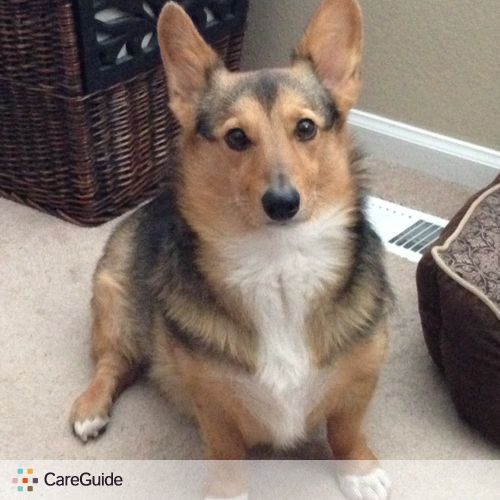 Pet Care Job Lisa S S's Profile Picture