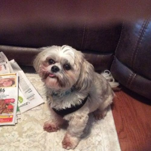 Pet Care Provider Denise R Gallery Image 2