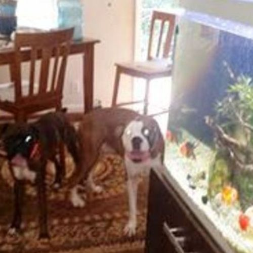 Pet Care Provider Rita MacCallon's Profile Picture