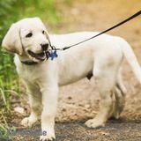 Dog Walker, Pet Sitter in North Richland Hills