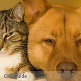 Dog Walker, Pet Sitter in Plainsboro