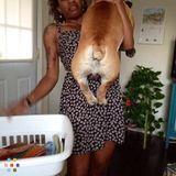 Dog Walker, Pet Sitter in Bremerton