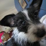 Dog Walker Job, Pet Sitter Job in Souderton