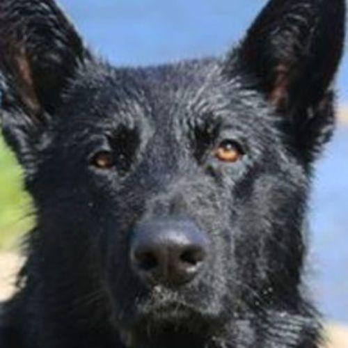 Pet Care Job Bukky F's Profile Picture