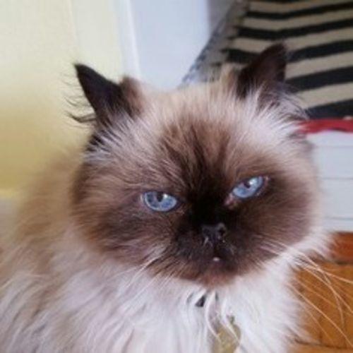 Pet Care Provider Cherie B Gallery Image 2
