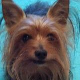Love dogs?Me too. Big or small. Can sit at your place or min Tarpon Springs Pet Service Provider Interested In Job u offered