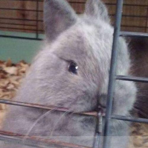 Pet Care Job Shannon Dupler's Profile Picture
