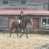 Searching for an animal caretaker position with horses/pets
